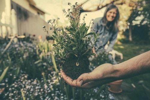 Assisted Living: Adaptive Gardening for Seniors